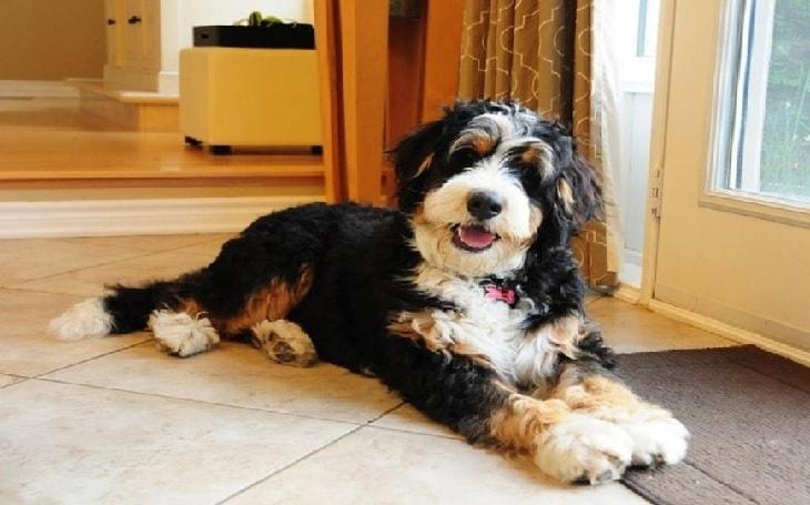 Cómo tratar la diarrea y los vómitos de perros con sangre de forma rápida y natural