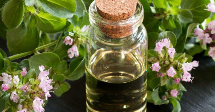 Health benefits of oregano oil