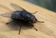 cómo deshacerse de las moscas